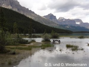 Waterfowl Lake Campground