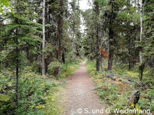"Wanderweg beim Martin River Campground durch den ""Urwald"""