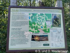Infotafel am Beaver Pond Trail