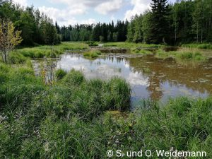 Am Beaver Pond Trail