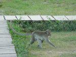 Ein Affe